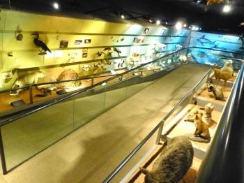MUSEO DI STORIA NATURALE verona