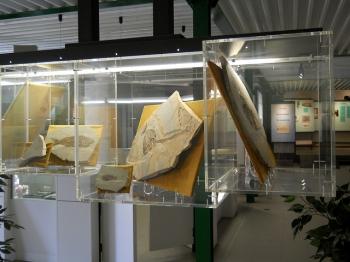 MUSEO DEI FOSSILI di BOLCA