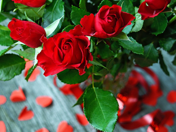RISO BARDOLINO E ROSE petali di rosa